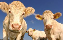 دانلود فایل صدای نشخوارکردن حیوانات