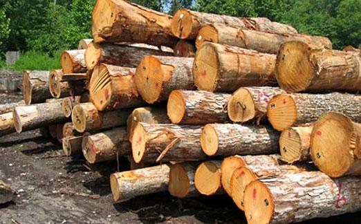 دانلود فایل صدای ریختن چوب