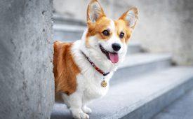 دانلود فایل صدای سگ